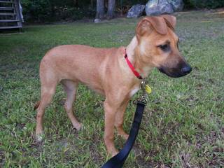 Southern Heritage Kennel - Dog Breeders