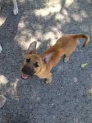 Murdock's Prize Pups - Dog Breeders