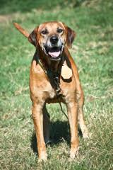 Glen and Betty Rushing - Dog Breeders