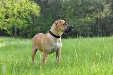 Borne iN the Bone Kennel - Dog Breeders