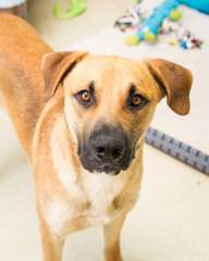RADERS BLACK MOUTH CUR - Dog and Puppy Pictures