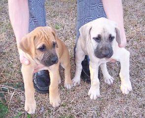Jason & Jessica Young - Dog Breeders