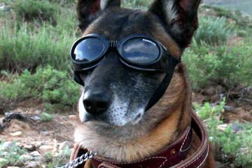 Seco Creek Kennels - Dog Breeders