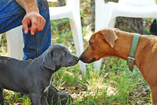 blue lacy my dog breeders part 81