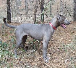 Jim Brooks Lacys - Dog Breeders