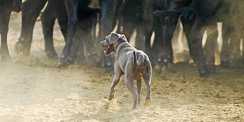 TrackStar Kennels - Dog Breeders