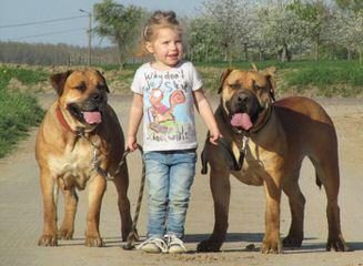 Grafix Farm Ventures - Dog Breeders