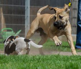 Hillsinger Farms - Dog Breeders