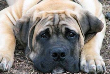 LORI PENSIS - Dog Breeders