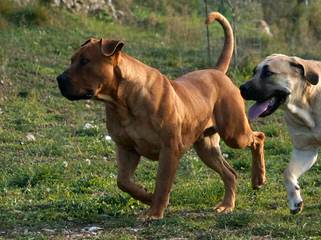 Robert Hence - Dog Breeders