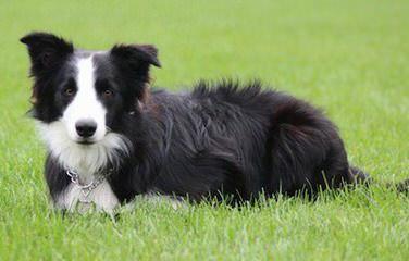 Butte Ranch Enterprises - Dog Breeders