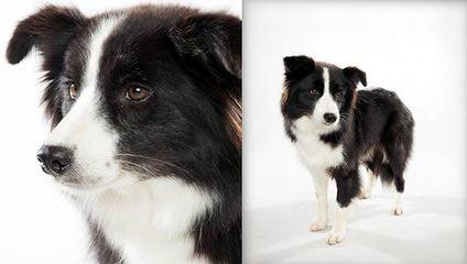 Valiant Dawn - Dog Breeders