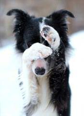 J. Mil Border Collies - Dog Breeders