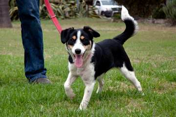 Jordyalan Border Collies - Dog Breeders