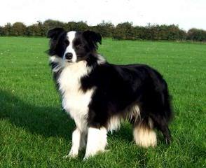Dreams Come True - Dog Breeders