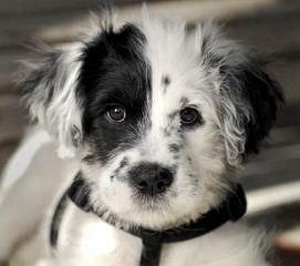 Seven Links Ranch Border Collies - Dog Breeders