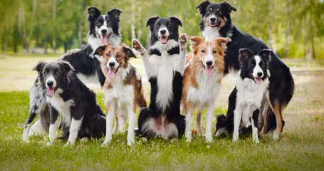 Dog Breeders in Alberta / Puppies For Sale in Alberta