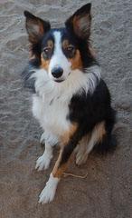 Biscuit Eaters K9 - Dog Breeders