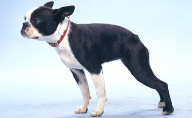 Argos Kennels - Dog Breeders