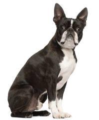Curlzcat - Dog Breeders