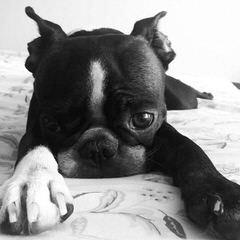 Sandy's Kennels - Dog Breeders