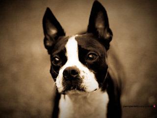 Mystiscritters - Dog Breeders