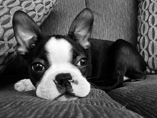 kayshappytails - Dog Breeders