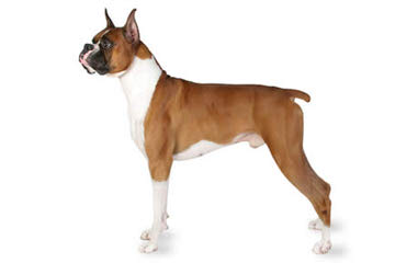 nakchhatra - Dog Breeders