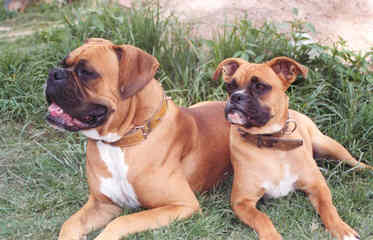 Rnb Kennels Reg. - Dog Breeders