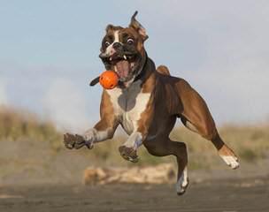 Tuff-N-Uff Kennels - Dog Breeders