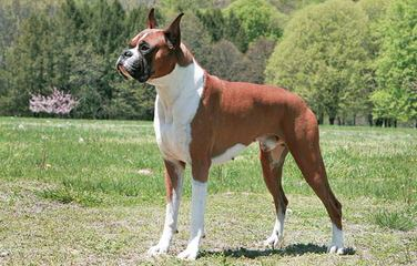 Simone Kissling - Dog Breeders