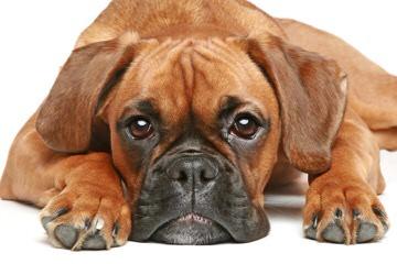 Rnb Kennels Reg. - Dog Breeders