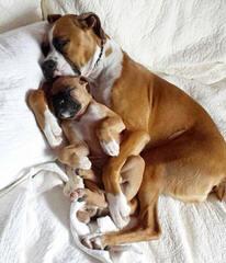 Amore Del Dio - Dog Breeders