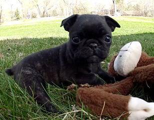 Puppy Land - Dog Breeders