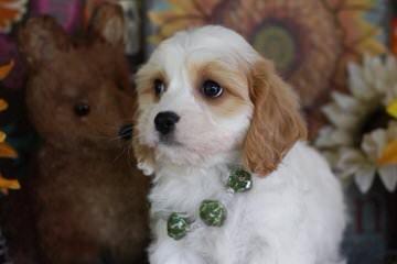 DC Dog Finders - Dog and Puppy Pictures