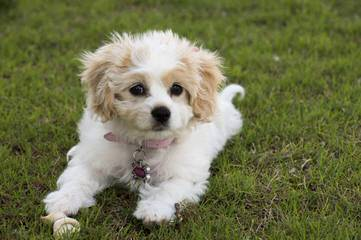 Kristi's Babies - Dog Breeders