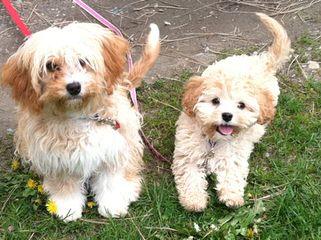 DC Dog Finders - Dog Breeders