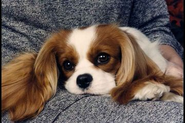 Shaloma Loves Puppies.Com - Dog Breeders
