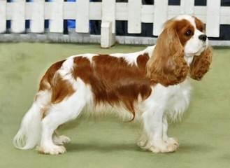 Loretta Hoffman - Dog Breeders