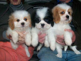 Shasta - Dog Breeders