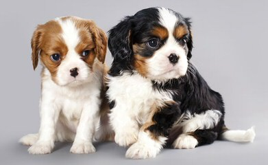 Dog Breeders in Georgia / Puppies For Sale in Georgia