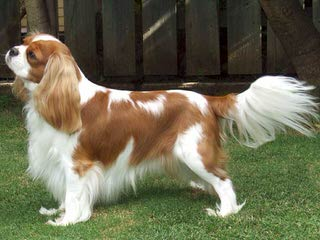 Harmanspuppies - Dog Breeders
