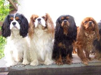 dog pond garden - Dog Breeders