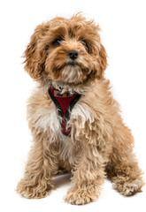 Freedomkennels - Dog Breeders