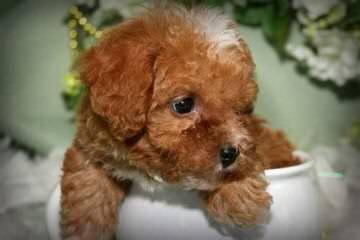 3 Pines Kennels - Dog Breeders