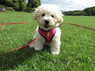 Country Home Kennels - Dog Breeders