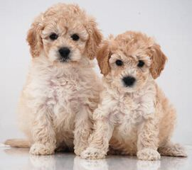 Sleeping Bear Kennels - Dog Breeders