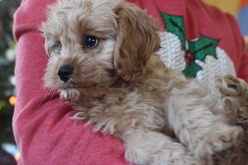 Dog Breeders in Alberta / Puppies For Sale in Alberta