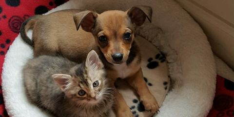 Shih-Poos - Dog Breeders