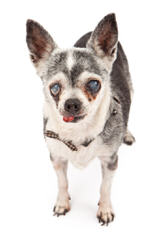 Fancy Paws Puppies & Boutique - Dog Breeders